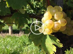 Video: Wein mit Egle #1
