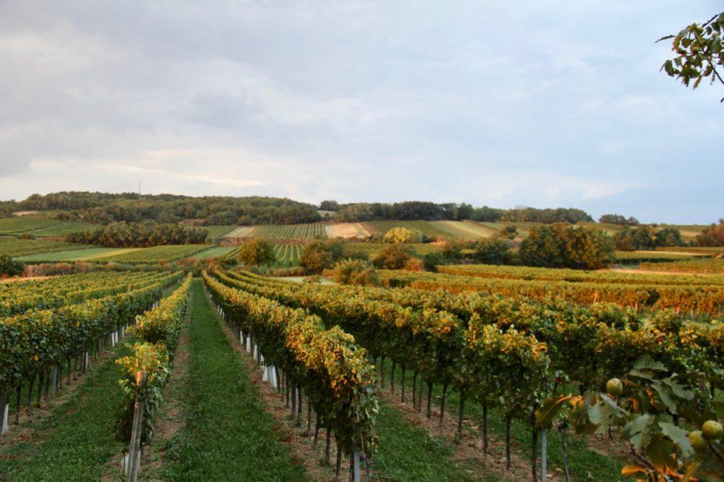 DAC Carnuntum: Ein Weinbaugebiet erfindet sich neu